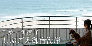愛犬と楽しむ宿 しぶごえ御宿海岸